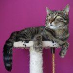 Tiragraffi per gatti: cosa sono e come scegliere i migliori