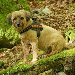 Pettorina per il cane: come scegliere la migliore