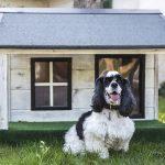 Cuccia per cani: come scegliere il modello migliore al miglior prezzo