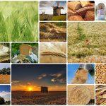 Macchina del pane: consigli, funzionamento e scelta della migliore