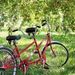 Tandem bici: guida all'acquisto della migliore, marche e prezzi