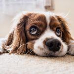Tappetino refrigerante per cani: guida alla scelta del migliore, prezzo e come funziona